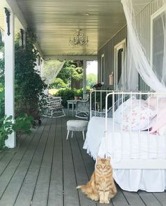 "Tracey Hiebert on Instagram: ""Oliver....one of the #kittyroundup stars😻 . . . #hydrangeafarmhouse #ilovecats #farmhouseporch #daybedontheporch #porchsitting…"""