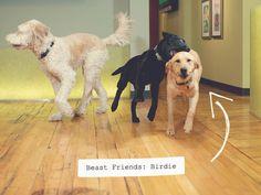 Domestic Beast • Beast Friends: Birdie