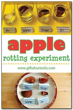 Apple rotting experiment - check out this apple science activity and see what happens to apples left in air, water, vinegar, and oil for a week! #apples #handsonscience #ece || Gift of Curiosity