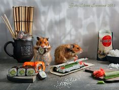 Unknown hamsters life: Humorous photos by Elena Eremina - 26