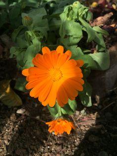 Hermosa flor del jardín de la casa.
