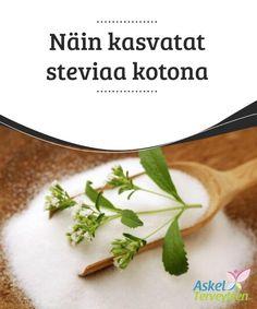 Näin kasvatat steviaa kotona   Stevia (Stevia rebaudiana) on #trooppinen kasvi, joka on k#otoisin Etelä-#Amerikasta.  #Mielenkiintoistatietoa