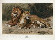 "Marie Rosa Bonheur - ""The Lion at Home. / Le Lion Chez Lui."""
