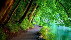Street in the woods Nature Cool Free Wallpapers for Desktop ...