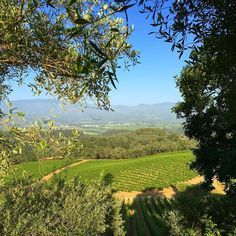 Good morning and Happy Sunday from the Estate vineyard! It looks like today will be a perfect day to visit Napa Valley! Who is coming?  #Merryvale #sthelena #napavalley #vineyards #sunday #sunrise #winetasting #winecountry #wine #beautiful