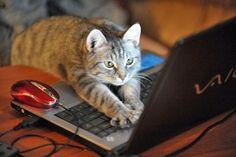 """なにやら真剣だったりイラついてたりしてる(ようにみえる)表情がなんとも可愛い。人間にだって訳分かんないもん。難しいよね。 [ss2 href=""""http://tumblr.tastefullyoffensive.com/post/61164377314/cats-using-computers-previously-cats-wearing#.Ukqq7NLIrAw"""" title=""""Tastefully Offensive on Tumblr, Cats Using Computer..."""