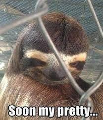 Image result for sloth meme