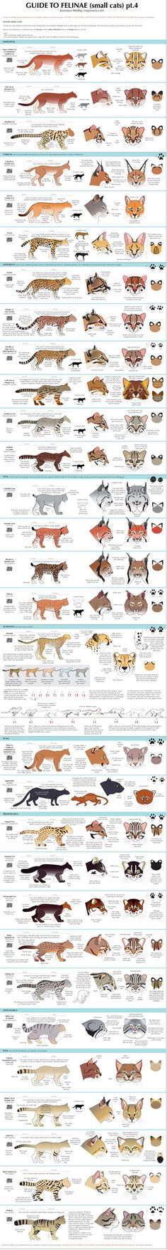 Guide to Little Cats by `majnouna on deviantART
