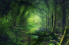 dementia-evas: Fairy Forest by Phatpuppyart-Studios Deep Forest, Forest Fairy, Forest Path, Magic Forest, Fantasy Places, Midsummer Nights Dream, Walk In The Woods, Fantasy Landscape, Fairy Art