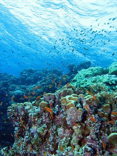 Sharm el-Sheikh Egypt is a hugely popular resort town on the Sinai peninsula.  http://georama.com/#Explore/Middle-East/Egypt