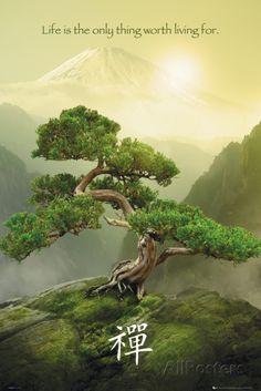 Zen-Mountain Print Life is the only thing worth living for. Plantas Bonsai, Zen Meditation, Vipassana Meditation, Meditation Benefits, Meditation Scripts, Ikebana, Tree Art, Tree Of Life, Scenery