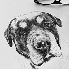 So far ....  half way ⛳️ #dogportrait #fineliner #dog #portraits #artist #portrait #commission