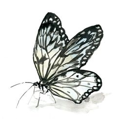 Wood Nymphe Butterfly Watercolor Painting Print. Zen by Zendrawing, €15.50