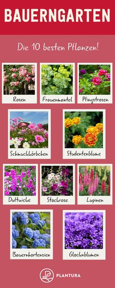 Bauerngarten: Die besten Pflanzen & Tipps zum Anlegen - Plantura Farm garden: the 10 best plants! A cottage garden can be a real dream if you put it on correctly and choose the right plants. These 10 Garden Types, Garden Care, Diy Garden Projects, Diy Garden Decor, Garden Cottage, Garden Pots, Alpine Plants, Aquatic Plants, Farm Gardens