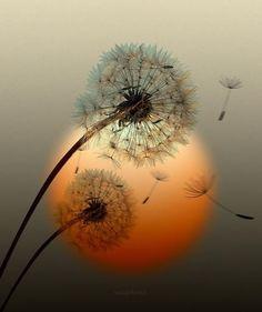 Enchanting .....