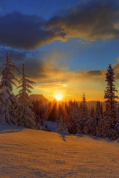 winter sunset over trees. All Nature, Amazing Nature, Beautiful World, Beautiful Places, Perfect Day, Cool Pictures, Beautiful Pictures, Amazing Sunsets, Beautiful Sunrise