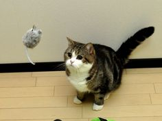 cute maru cat and mouse toy