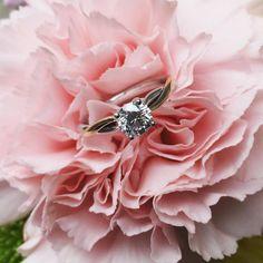 18KT White and rose gold engagement ring with Maple Leaf Canadian Diamond center. #engagement #weddingring #ring #rosegold #canadiandiamonds