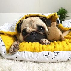 Get fantastic recommendations on pug dogs. They are actually on call for you on our site. Cute Pug Puppies, Dogs And Puppies, Cute Dogs, Doggies, Cute Baby Animals, Funny Animals, Baby Pugs, Pug Love, Boxers
