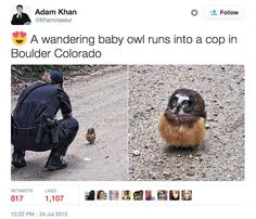 And this baby owl who got a talking-to from an officer. | 26 Of The Most Important Baby Animals Of 2015