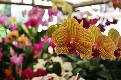 Orquidea - Orchid | by CAUT