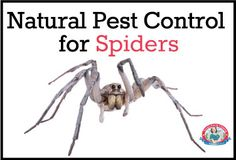 Natural #Pest Control for #Spiders