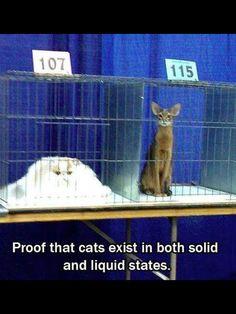 Cats exist in both solid and liquid states (Google translate) Prueba de que los gatos existen en estados sólidos y líquidos