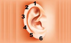 How to Apply Reflexology to the Ears. Ear reflexology is not as well-known as foot or hand reflexology, but can relieve stress and pain. Application of ear reflexology is fast and easy. You massage pressure points on the ear to treat aches. Health And Nutrition, Health Tips, Health And Wellness, Health Fitness, Ear Reflexology, Bra Hacks, Back Pain, Natural Health, Health Benefits