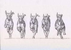 Deviantart dog anatomy, animal anatomy, anatomy drawing, animal sketches, a Animal Sketches, Animal Drawings, Art Sketches, Art Drawings, Animation Sketches, Animation Reference, Art Reference, Dog Anatomy, Anatomy Drawing