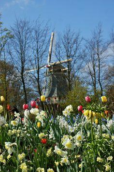 windmill, Keukenhof Gardens, The Netherlands.  Phto: KarlGercens via Flickr.