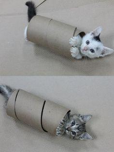 toilet paper kitties