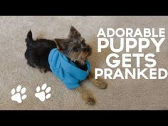 Adorable Puppy Gets PRANKED!! - YouTube