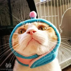 Kitty Photo From @cotamama.0210
