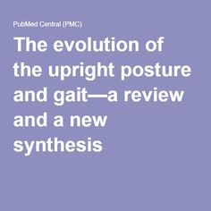 The evolution of the upright posture and gait—a review and a new synthesis