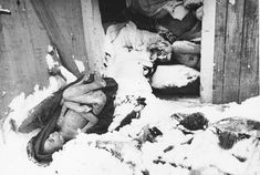 Dead bodies found in a shed at the Birkenau concentration camp.