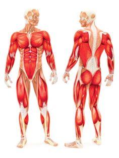 Quels sont les muscles sollicités lors de l'utilisation d'un rameur? - Capsule santé | Trucs et conseils Club Piscine