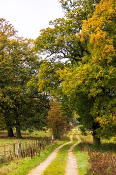 🇬🇧 Field road in early fall through the oak trees (Londesborough, England) by James Laing 🍂cr.