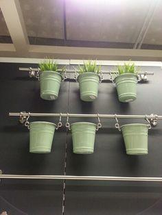 In kitchen herb garden. Ikea.