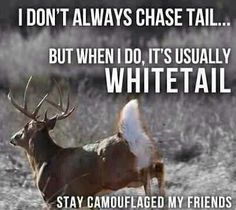 Chase Tail...