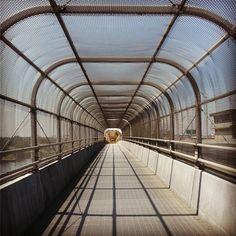 #conqueringfears #heights #bridges #bikeride #Norfolk #NorfolkVA #757collective #latergram #veganinva