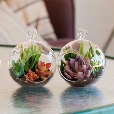 """Mini Succulent Terrarium Duo Kit Collection: Graptoveria """"Debbie""""/Gollum Jade & Red Graptosedum/Gollum Jade"""