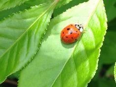 Cute little lady bug I found!