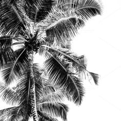 Palms by Dvoevnore travel photos on @creativemarket