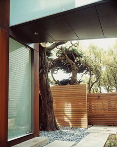 The cypresses beyond the ipe fence afford the family privacy.  Photo by: Robert Schlatter