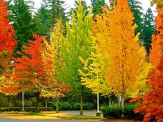 Pie Praise Elohim for His beautiful and varied creation! So glad we all and fall leaves come in so many beautiful colors!Praise Elohim for His beautiful and varied creation! So glad we all and fall leaves come in so many beautiful colors!