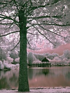 ✯ Winter Dawn