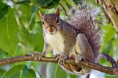 Come On Up   #squirrel #nature #animals #photography #photos #500px