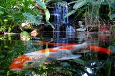 By: One Second in Life -  Little Heaven (Marie Selby Botanical Gardens)
