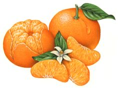 One whole Mandarin orange with a leaf, one peeled whole Mandarin orange with three orange segments and an orange flower with leaves.