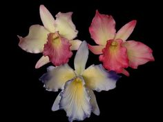 Cattleya Orchids sugar flowers — Flowers